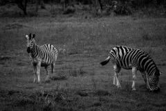 20131205-South Africa-3
